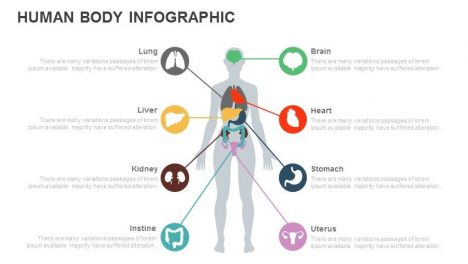 Human Body Infographic Powerpoint and Keynote template