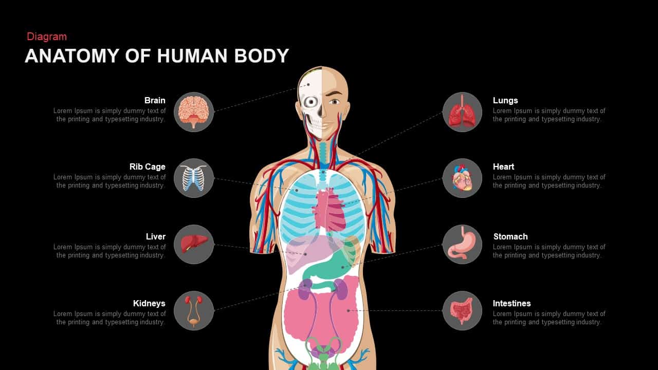 Anatomy Of Human Body PowerPoint and Keynote template