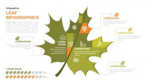 Infographic Leaf PowerPoint Template and Keynote Slide